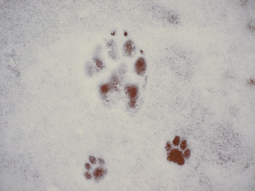 Betty, Sadie and Maple Paw Prints