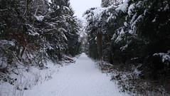 DSC04202 (edwardsgt) Tags: snow january tring 2010