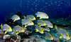Sweeeet lips (Lea's UW Photography) Tags: underwater fisheye maldives sweetlips malediven tokina1017mm unterwasserfoto leamoser süsslipen