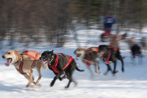 dog sled-39