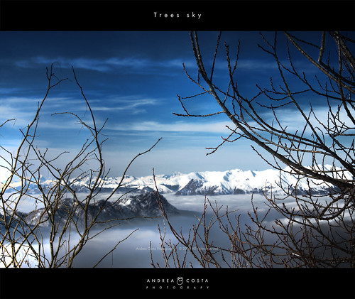 Trees sky - Piani di Bobbio
