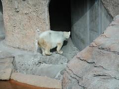 Zoo of Denver  DSCN0140_1