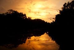 Tanjung Puting 05 (ignacio izquierdo) Tags: park parque indonesia rainforest selva national bosque jungle borneo orangutan ape tropical nacional apes tanjung primates monos kalimantan simios puting orangutanes