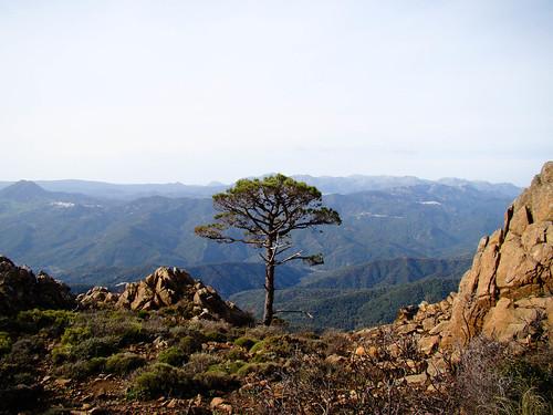 Ruta Sierra Bermeja (21)