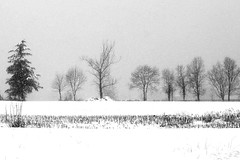 March is playing up... (oriana.italy) Tags: trees winter snow nature season landscape countryside c over s x fields sh varese sb epa ultimateshot brilliant~eye~jewel cherryontopphotography orianaitaly thebestofflickrsbest marzofalebizze marchisplayingup
