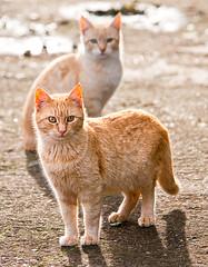 Moixos (Juan Antonio Cap) Tags: animal cat kat feline chat gato felino katze mace  gatto  kot gat koka kedi kissa kttur maka kucing pusa mo moix    minino    pisic