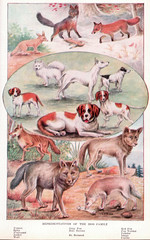 Dog Family page 840-841