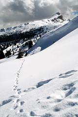 Portami l (*maya*) Tags: white snow ski mountains alps montagne footprints neve alto alpi bianco sci dolomites dolomiti bolzano bozen orme adige sudtirol pralongi valbadia gadertal sassodellastrega sassdlastria