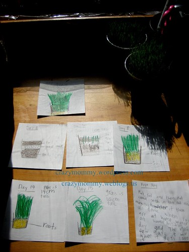 grass growing project journal