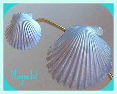 Scallop Magnets (1022 Sea Shell Ave) Tags: seashell scallop magnet authentic