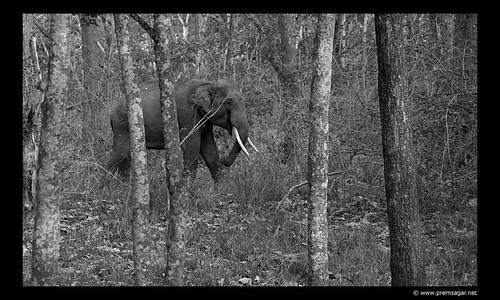 Wayanad Elephant
