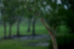 RainyMorningFlash