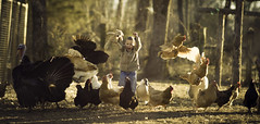 Mischief on the Barnyard (Phillip Haumesser Photography) Tags: chickens scare barnyard kid child boy animals farm sony rokinon philliphaumesser