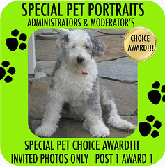ADMIN & MOD CHOICE AWARDSPECIAL PET PORTRAITS