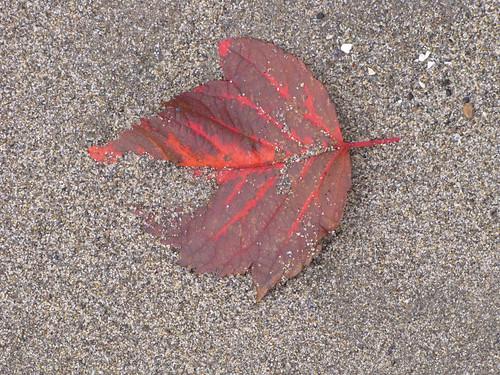 Sand-swept