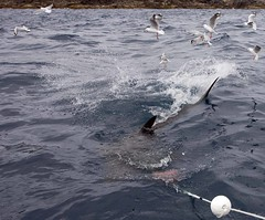 Neptune Island (C) 2009