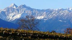 Blick von Girlan in Richtung Meran (mikiitaly) Tags: schnee panorama snow mountains fall montagne herbst berge casio neve autunno exilim soe reben südtirol altoadige vignetti exfh20