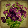 'til the morning... (figment_) Tags: flowers stilllife texture vintage square purple artistic layers legacy textured purpleflowers firstquality imagepoetry justimagine innamoramento visiongroup memoriesbook atqueartificia 攝影發燒友 artistictreasurechest miasbest miasexcellence daarklands oracosm oracope legacyexcellence boxofhappymemories flickrvault magicunicornverybest selectbestfavorites selectbestexcellence magicunicornmasterpiece flickrvaultexcellence trolledproud trollieexcellence daarklandsexcellence stillexcellence sbfmasterpiece magiayfotografia