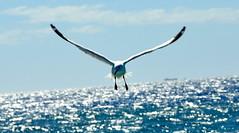 Free as a Bird (Eustaquio Santima