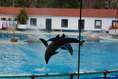 Golfinhos a Saltar II / Dolphins Jumping II (Nuno-Gomes) Tags: life wild nature animal zoo interesting fantastic bestof shot dolphin lisboa lisbon great best explore greatshot colored golfinho nunogomes excelent topseven mygearandmepremium mygearandmebronze mygearandmesilver mygearandmegold mygearandmeplatinum mygearandmediamond ngomes