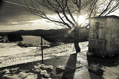 Into the Sun (davcare) Tags: winter bw white mountain snow black nikon bn verona neve inverno montagna bianco nero d90 campofontana