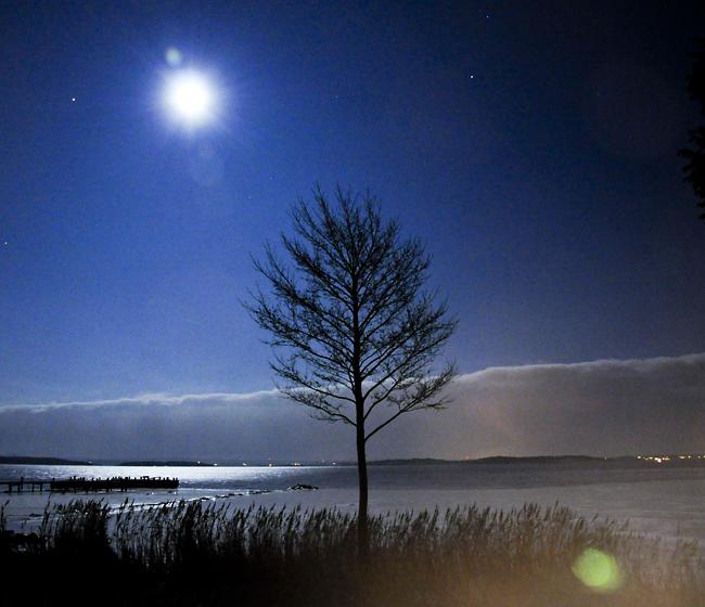 alen i månsken