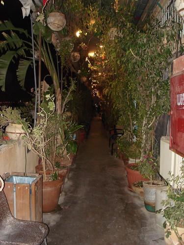 Corridor of plants