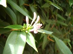 Bloemen (rozawilart) Tags: bloemen kleurrijk feestelijk