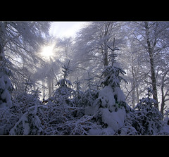 Winter (motivsucher) Tags: wood schnee winter snow cold forest hoarfrost kalt wald raureif sauerland niedersfeld clemensberg