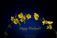 Happy Weekend! HAPPY CLICKING! (Captain Suresh Sharma) Tags: flashphotography wishes yellowflowers naturephotography indoorphotography flowerphotography flowerdecoration tabletopphotography ornamentalflowers photographybycaptsureshsharma bestflashphotography elinchromstrobeaccessories elinchromgrids elinchromhoneycombs photographywithelinchromstrrobes