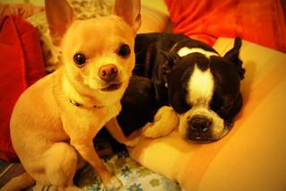 unbearable cuteness!