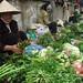 Pham Ha Photo 11
