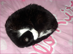 Bolita de pelos (Wendy MC ) Tags: cute cat kitty mexican gato stuff kawaii gata wendy pancha coleccin coleccionista wendymc hellokittyfan wendybonita blosfer hellokittycollector sanriocollector micoleccindehellokitty wendybonitamc collectorgirl coleccionistadehellokitty colecindehellokitty