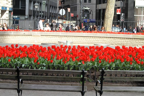 Tulips on Broadway