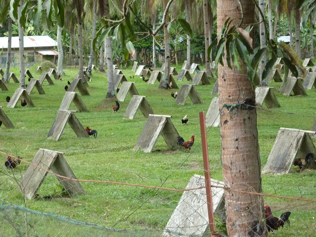 Bohol-Talibon-Chocolate Hills (94)