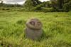 Oba (Incito.Vacations - Ng Sebastian) Tags: ancientcivilization oba badavalley megalithofbadavalley