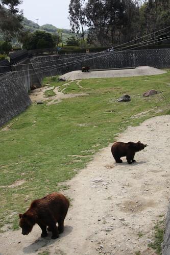 クマのいる館