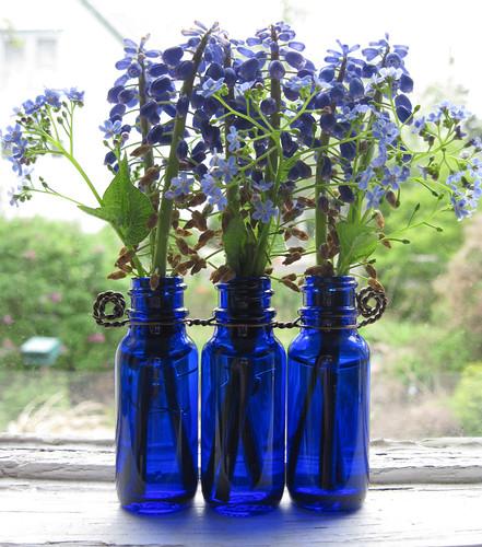Grape Hyacinths 1