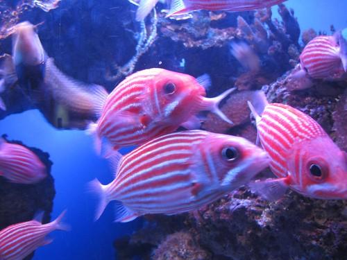 the striped fish were friendly