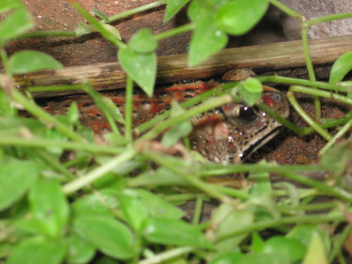 Hide and Seek Toad! - Sowmya Srinivasan