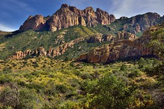 Greens and Browns with a Backdrop of Lost Mine Peak (Big Bend National Park)