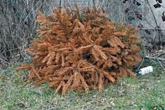 5 - Cadavres de fêtes passées (melina1965) Tags: 2017 février february bourgogne saôneetloire saintvallier burgondy nikon coolpix s3700 winter hiver arbre arbres tree trees sol sols