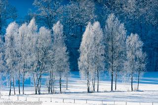Winterbäume aufgenommen im Sauerland - Frozen trees photographed in the winter Sauerland