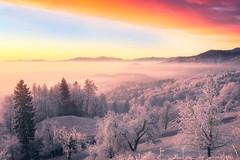 Fiery story (Dejan Hudoletnjak) Tags: sunrise winter fiery fire ice cold frost valentine romance romantic landscape trees nature