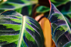 Plant (Angus Campbell King) Tags: plant nature green blue macro close up quality project art