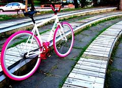 TAIWAN FIXED GEAR EASY FRAME X SAPIM WHEELSET X FYXATION PINK TIRE (OZOTW) Tags: pink shop cycling asia track display taiwan bikes tire singlespeed fixedgear trick threadless cog handlebars 118 ozo 4130 madeintaiwan straightfork chromoly easyframe ozotw straightriser fyxation dualdropout taiwanfixedgear wwwozotwcom fixiie