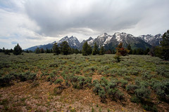 The Grand Tetons (thefuton) Tags: travel trees mountains nature day cloudy roadtrip wyoming grandtetons grandtetonnationalpark