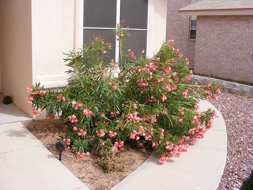 Girl Anime Wallpapers Front Yard Landscaping Ideas Perth