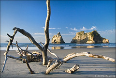 buried spider (Daniel Murray (southnz)) Tags: wood shadow sea newzealand tree beach landscape islands golden bay coast spider sand scenery driftwood nz southisland archway wharariki southnz