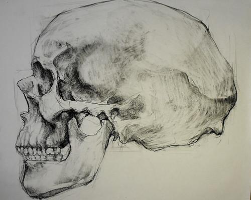 side_skull